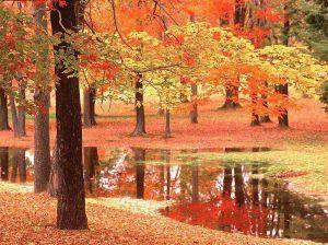autunno_rosso_1[1]